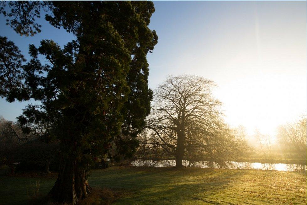 sun shining through winter trees norfolk yoga retreat