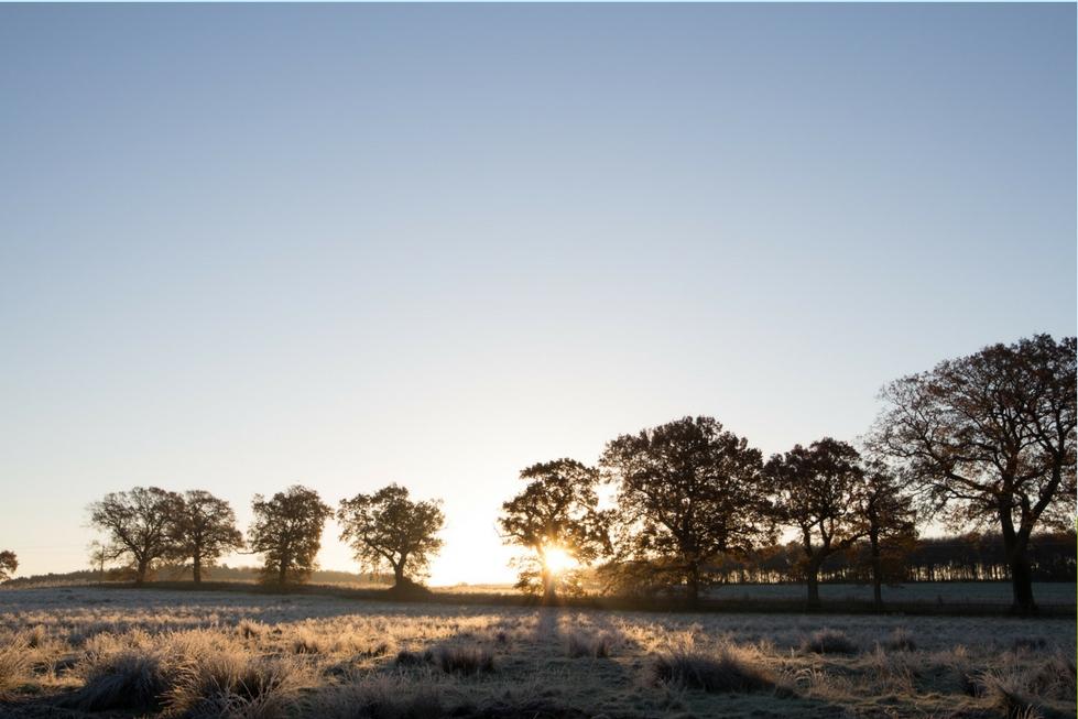 a row of trees sun shining through autumn light norfolk yoga retreat